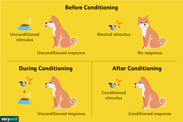 Classical conditioning vce u4 psych.